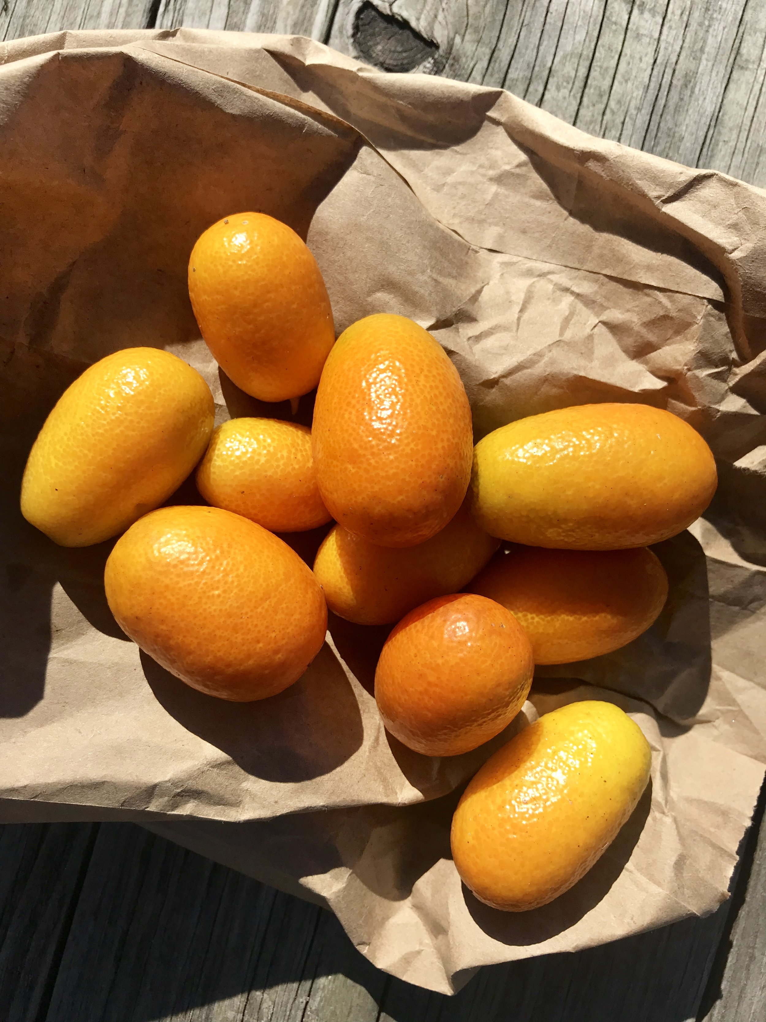 Kumquats /  Apalachicola