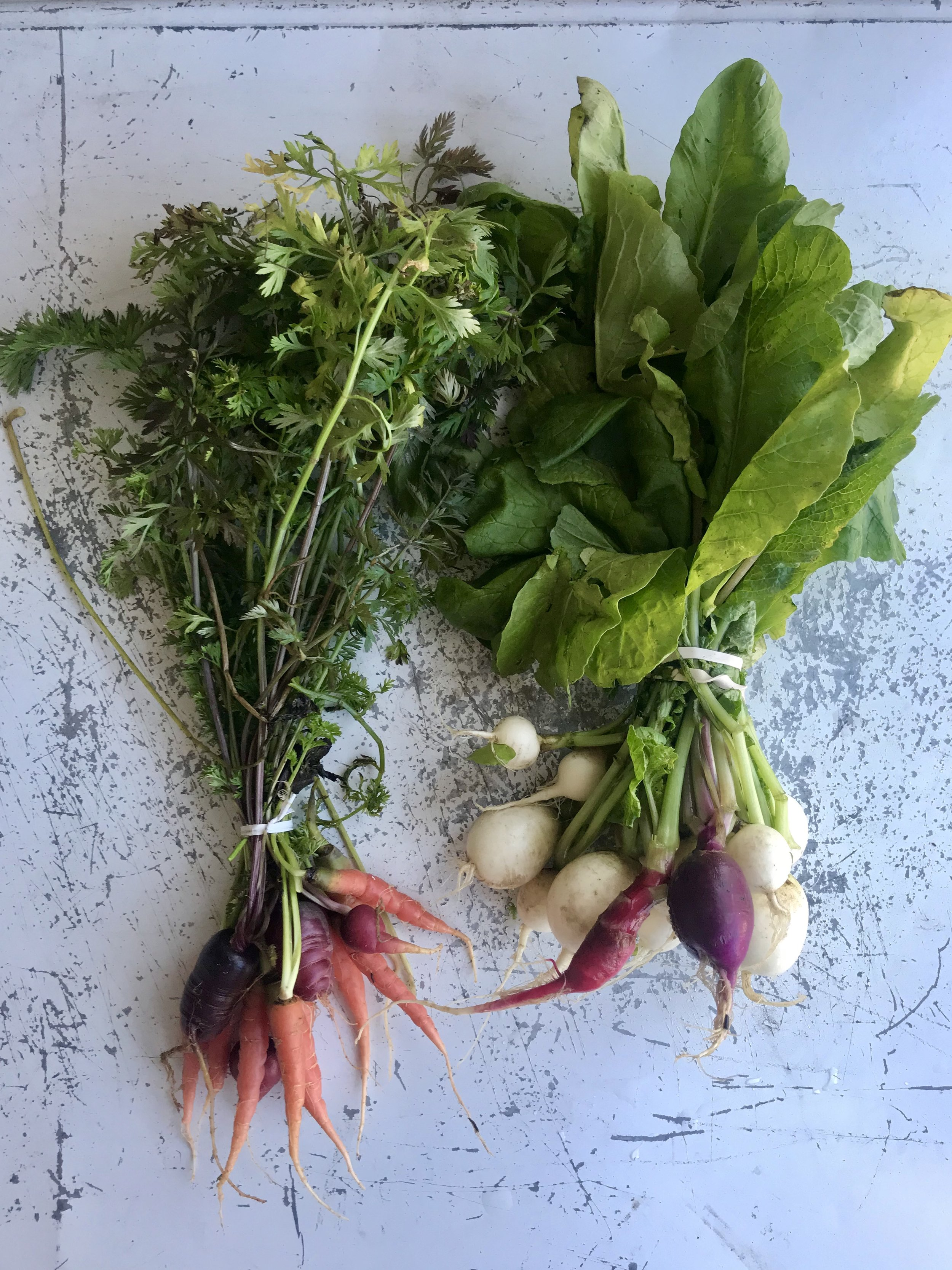 Radishes and Carrots /  Stone Hollow Farmstead