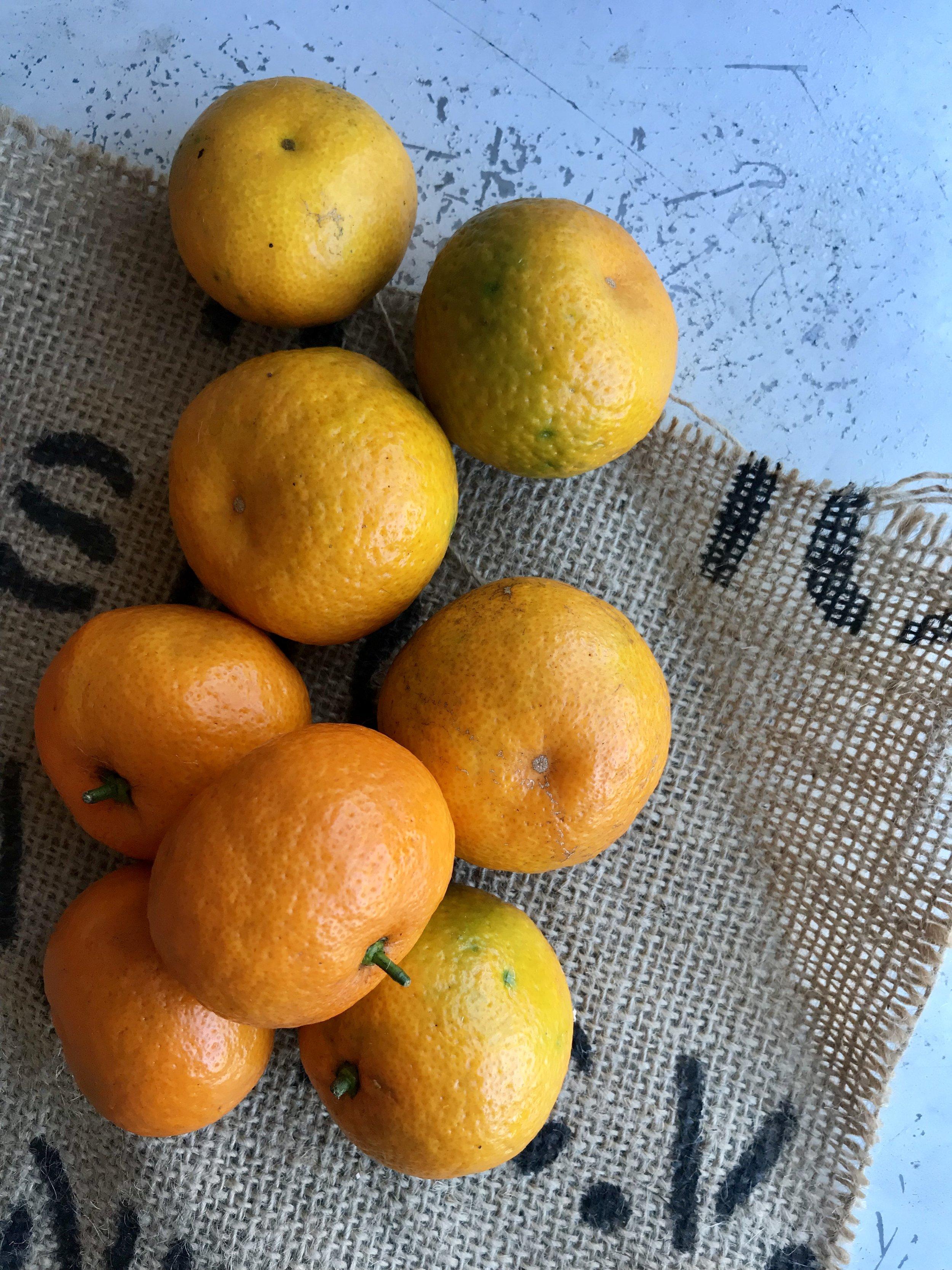 Oranges /  Florida