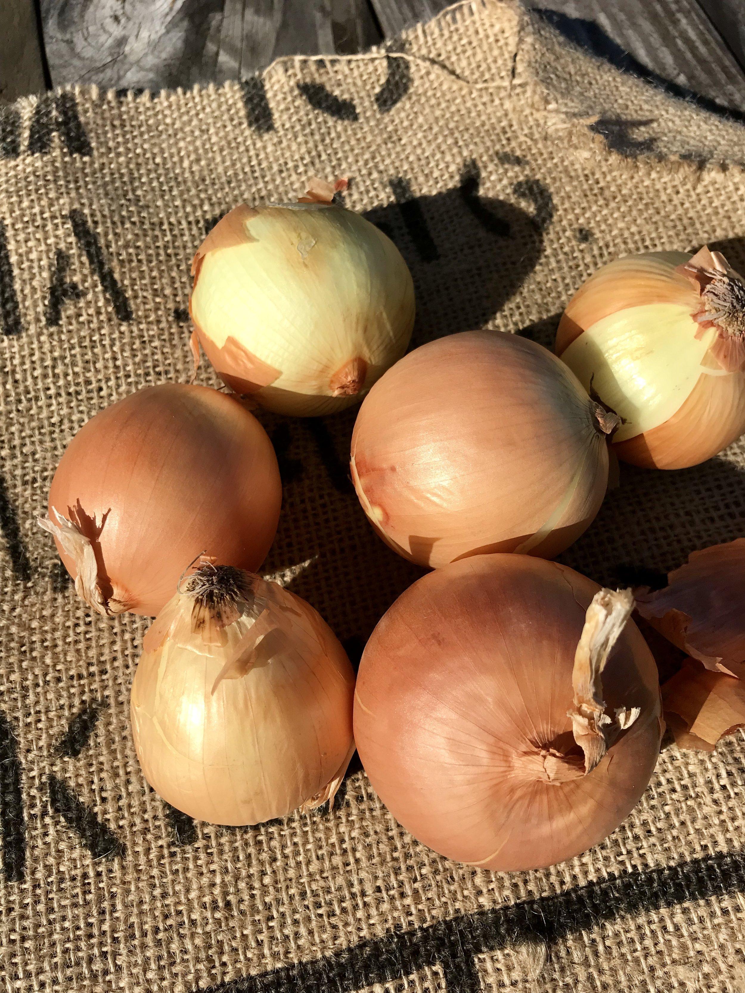 Onions /  Texas