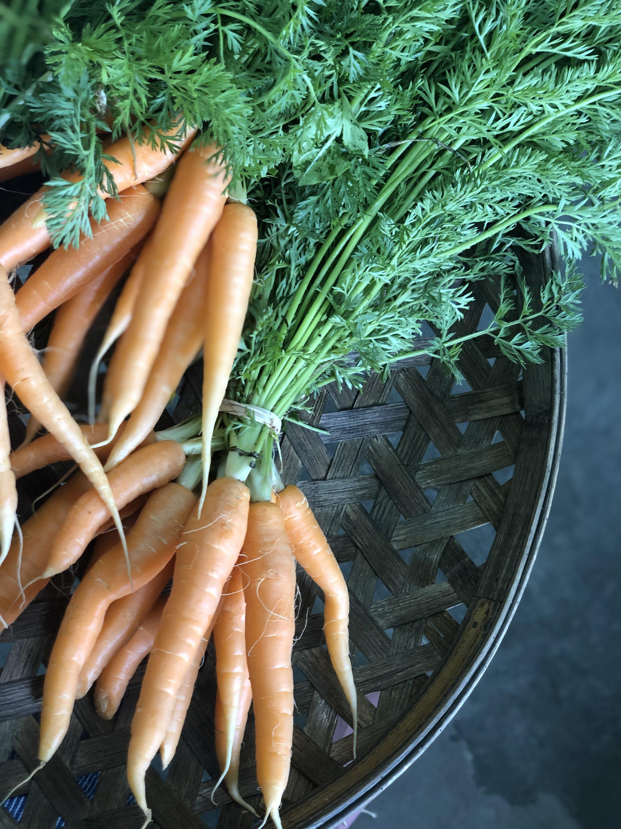 Baby Orange Carrots  /   Belle Meadow Farms