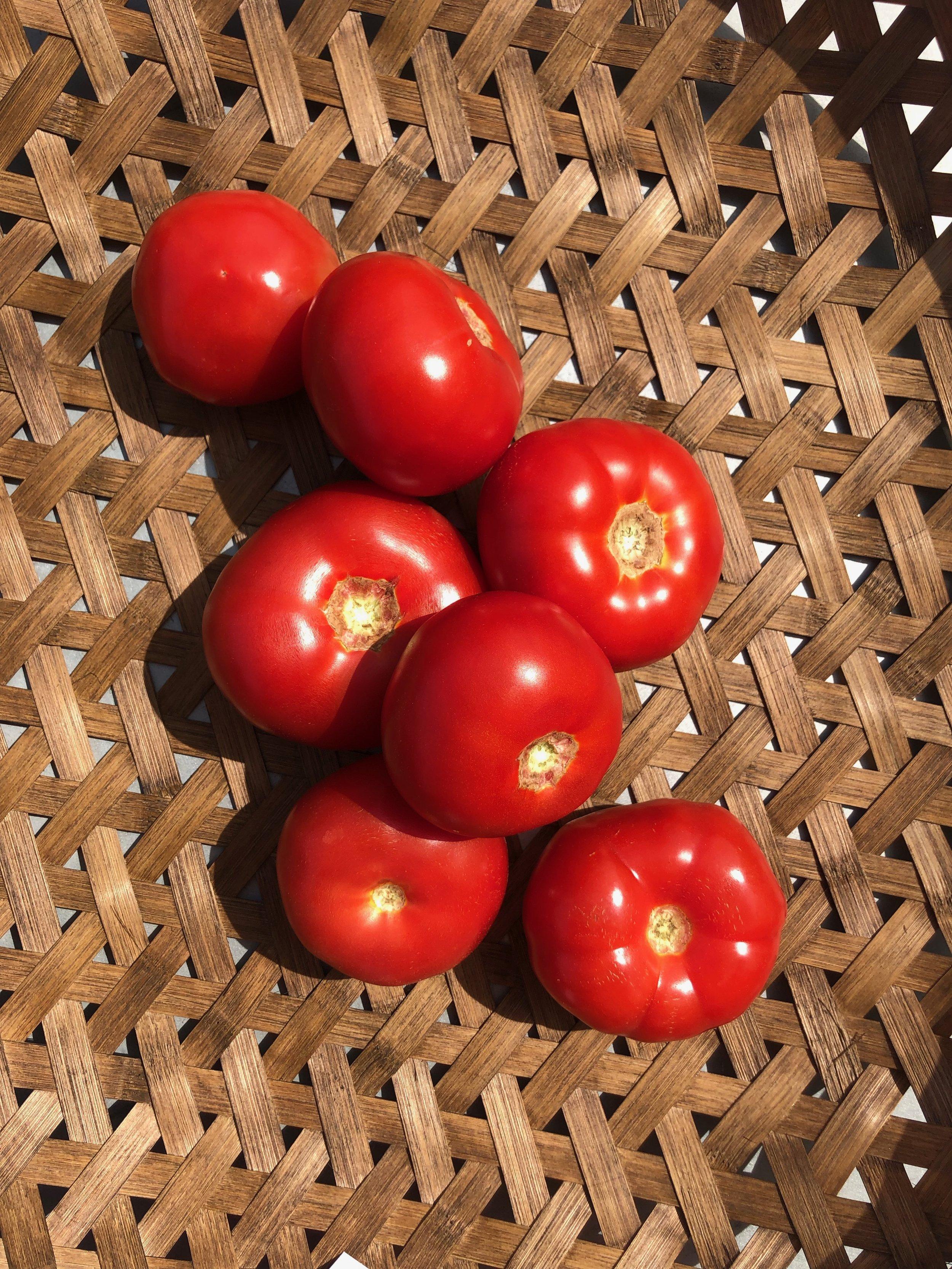 Slicing Tomatoes /  Greanleaf Nursery