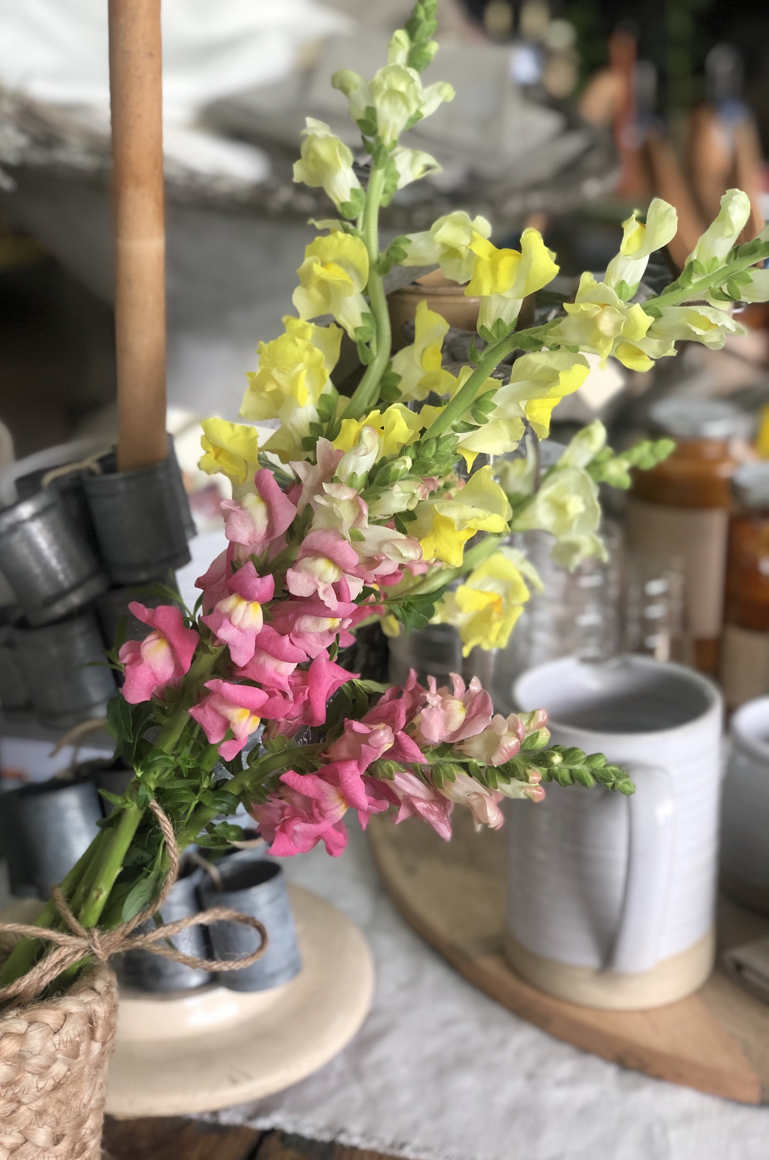 Snapdragons - Stone Hollow FarmStead