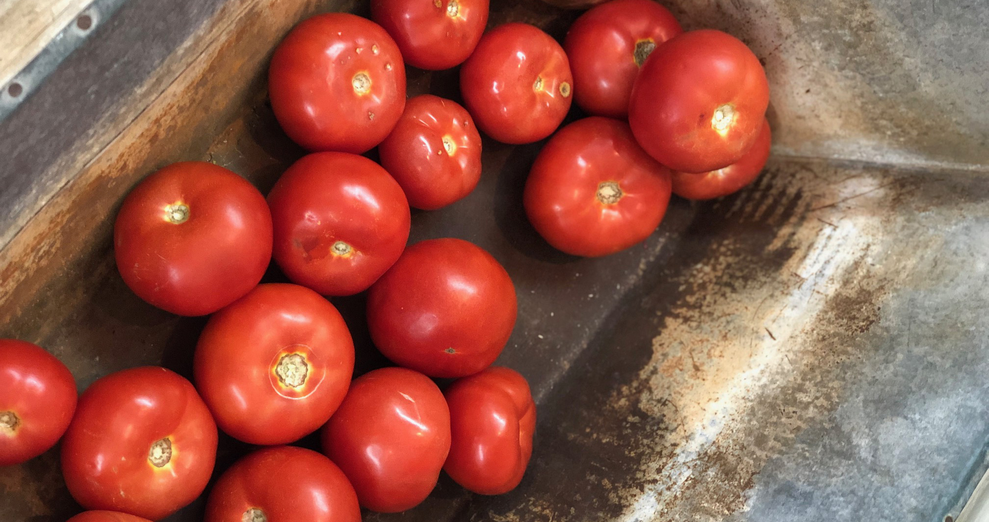 Hot House Slicing Tomatoes-  Greenleaf Nursery