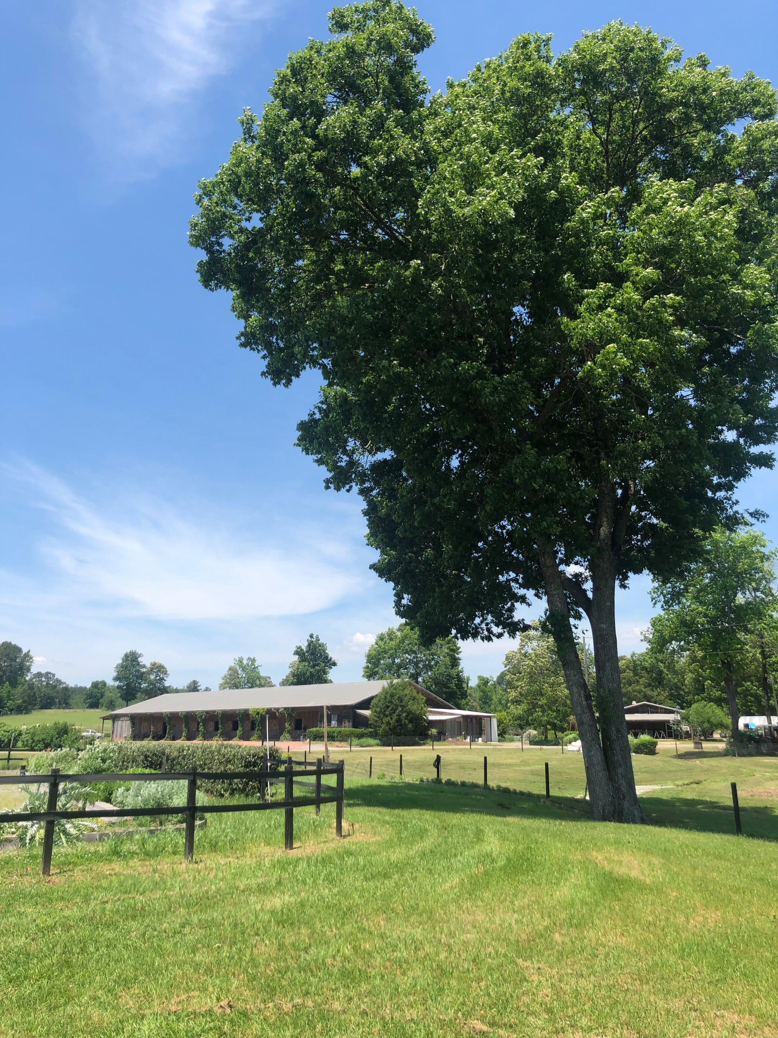 Stone Hollow FarmStead