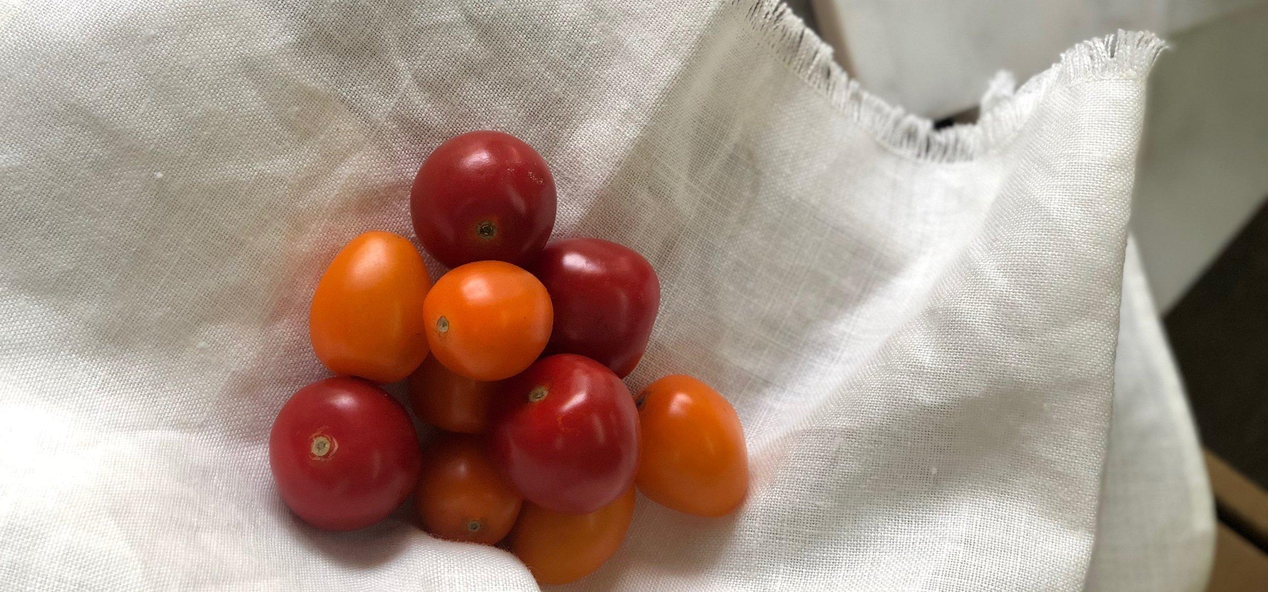 Cherry Tomatoes-  Greenleaf