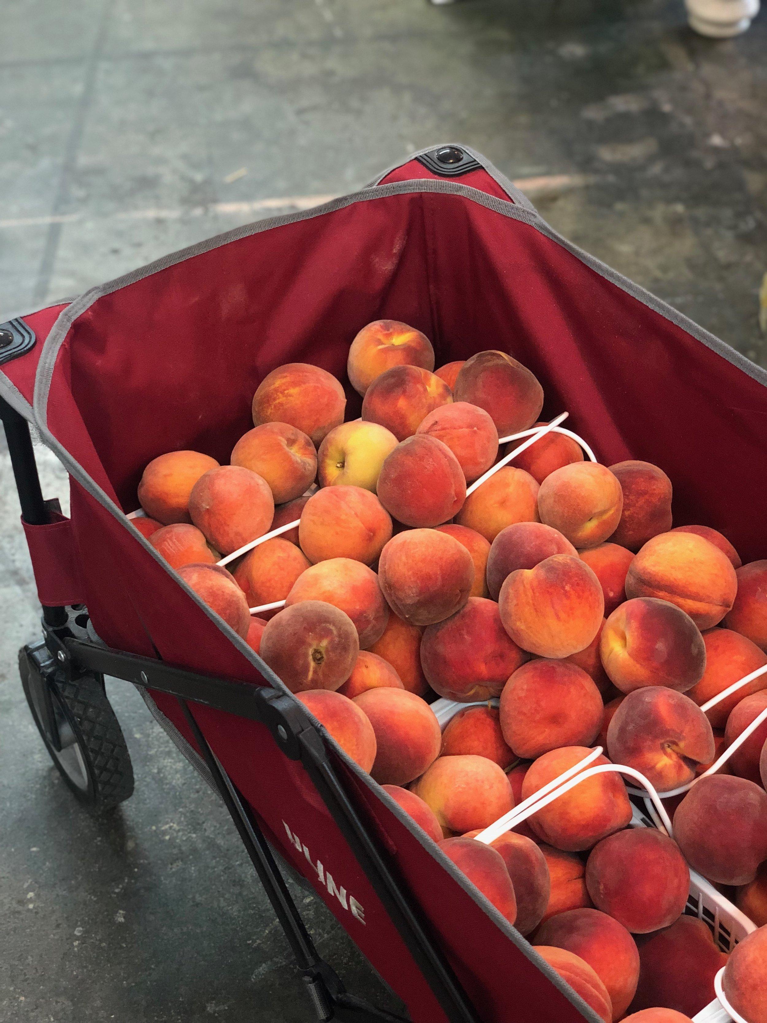 Peaches/ Chilton County