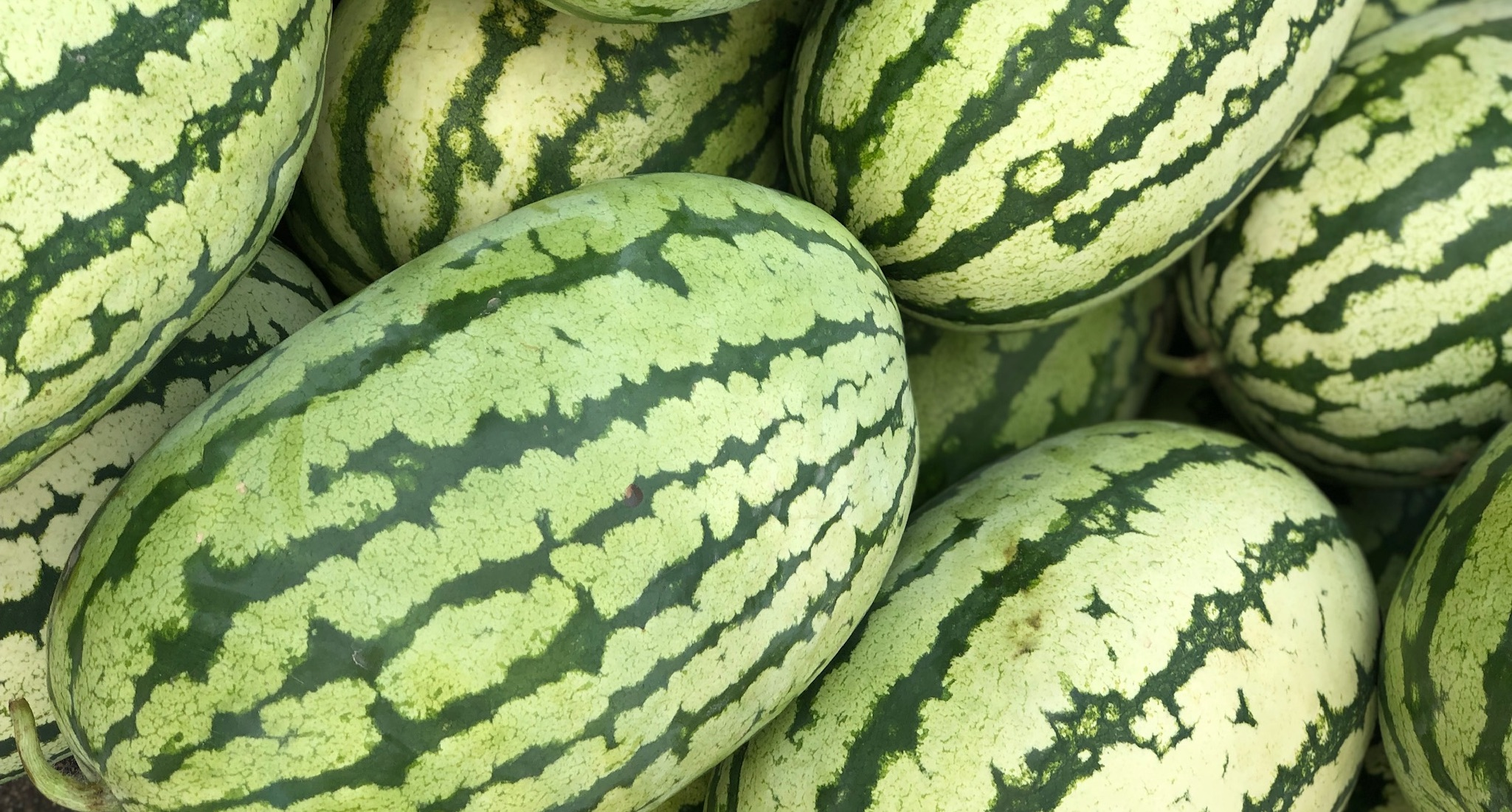 Watermelons- Chilton County