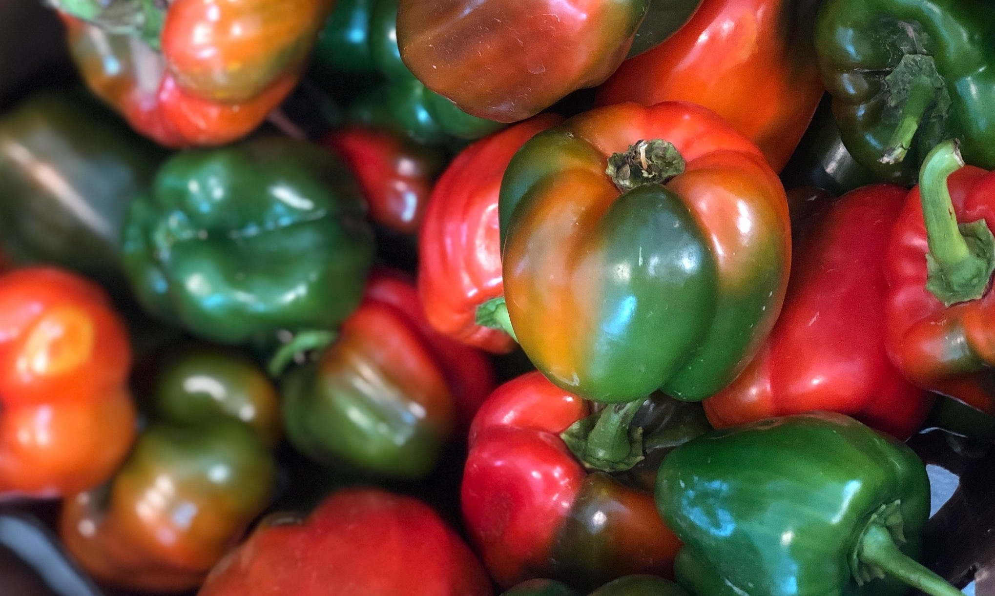 Multi-Colored Bell Peppers -  Stone Hollow Farmstead - Harpersville, Alabama