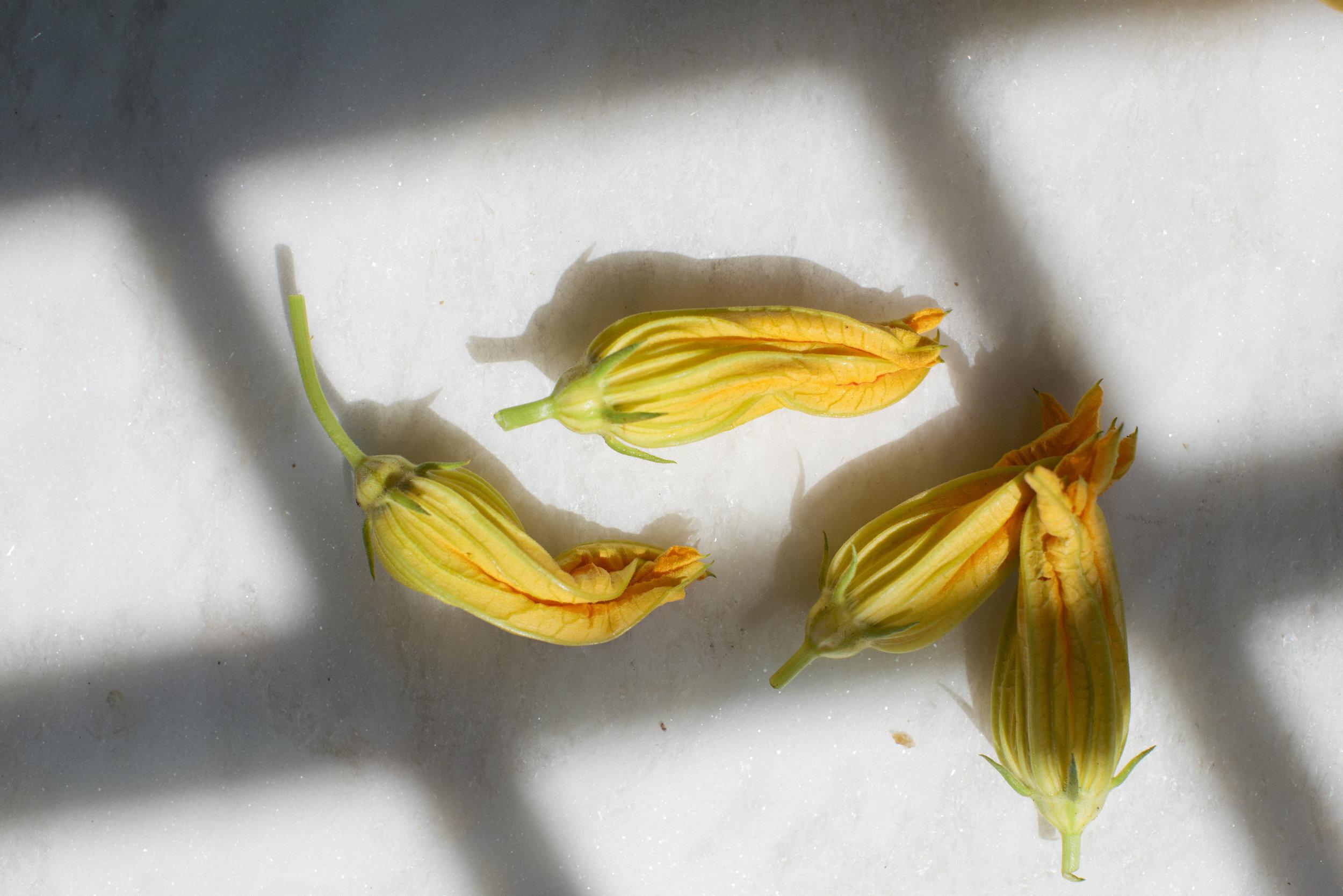 Squash Blossoms /  Belle Meadow - Tuscaloosa, Alabama