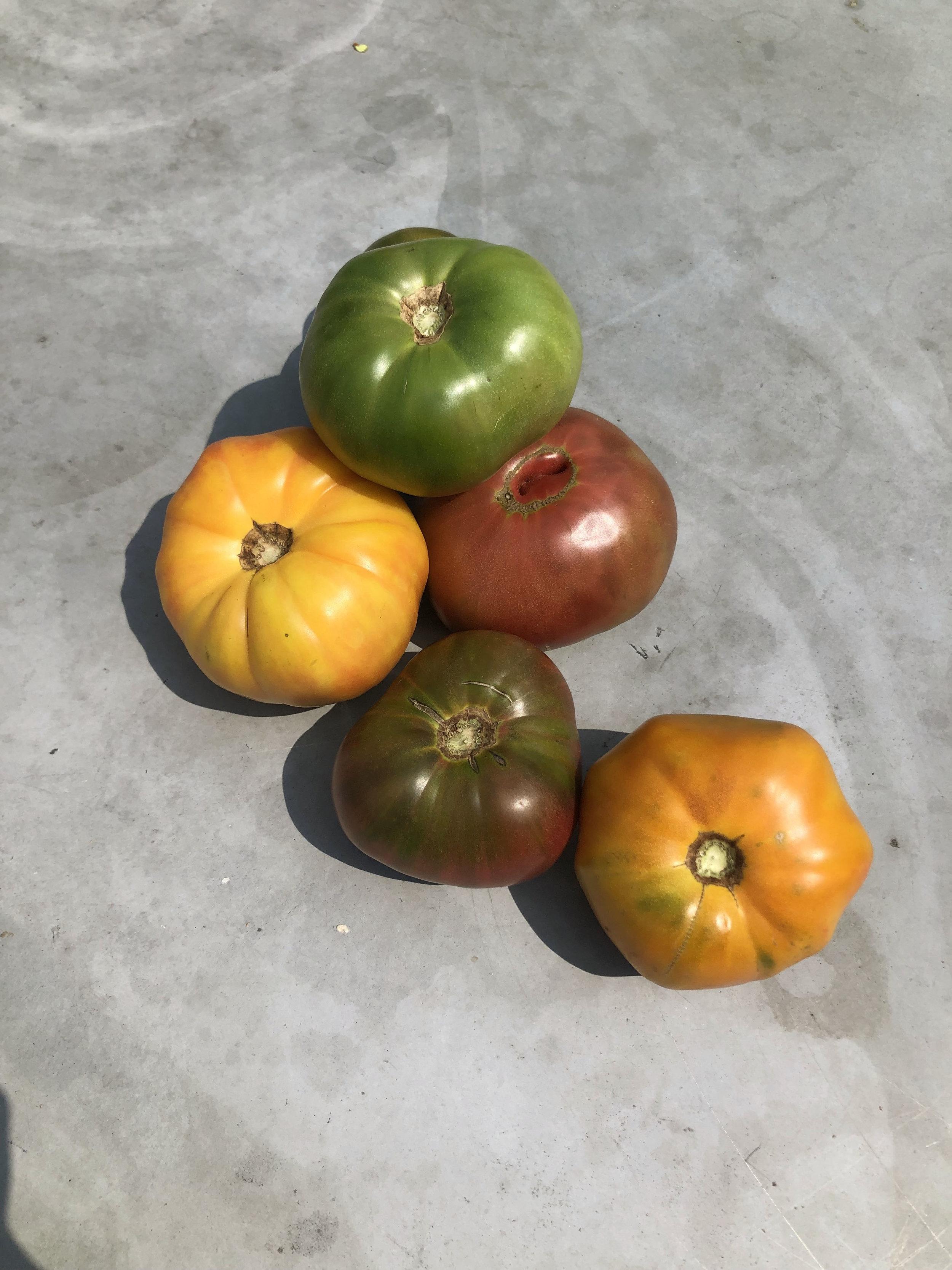 Heirloom Tomatoes  / Habersham Farms