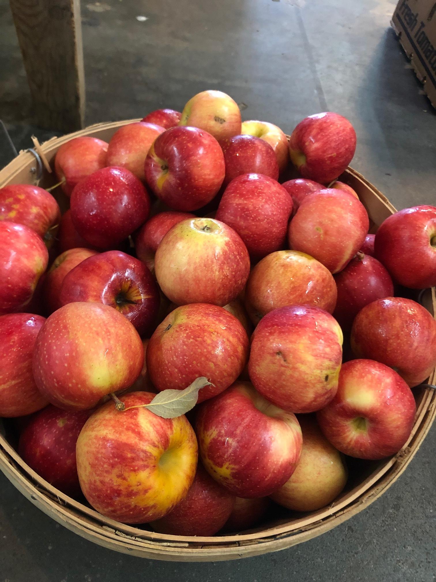 Gala Apples  / Regional Local