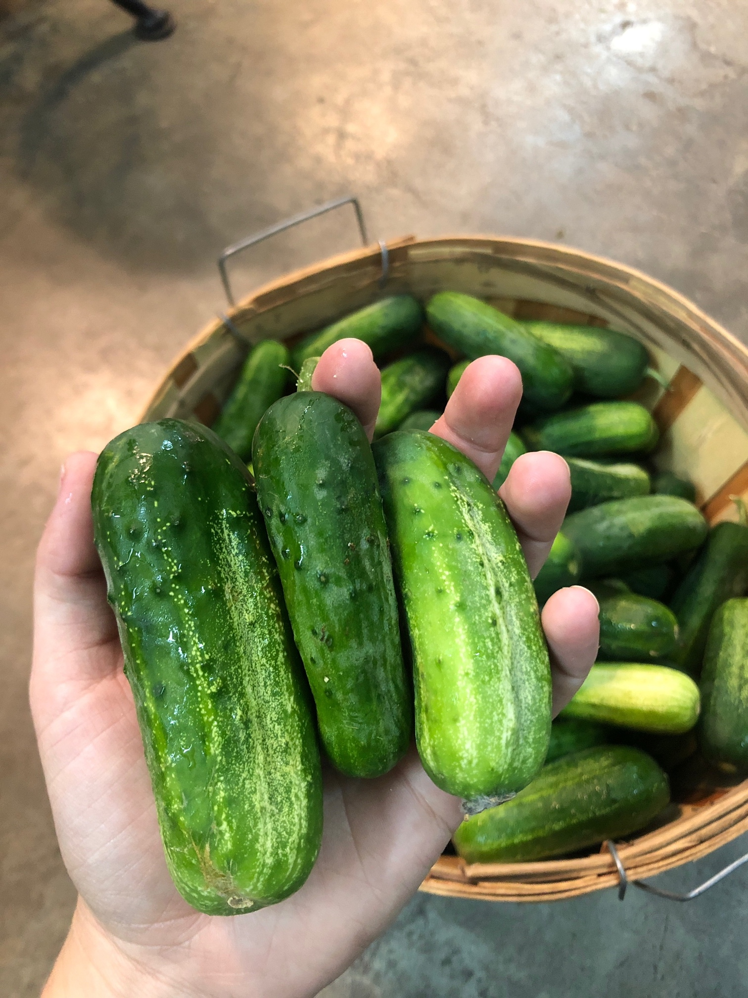 Pickling Cucumbers  / Blount County
