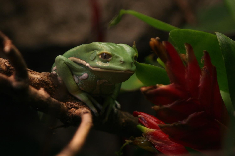 frog_trippin.jpg