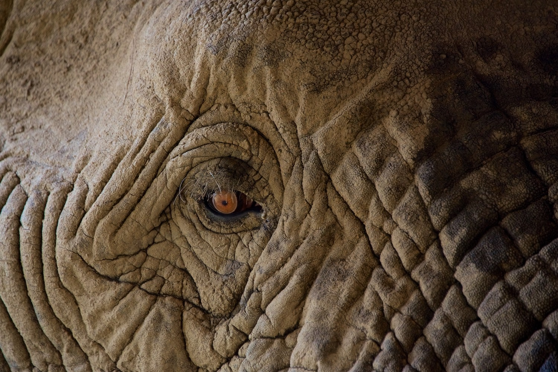 elephant_eye.jpg