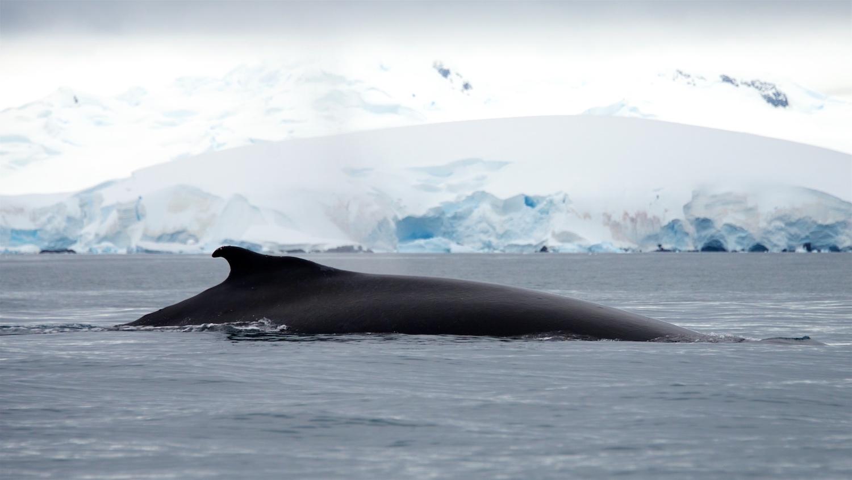whale_fin.jpg