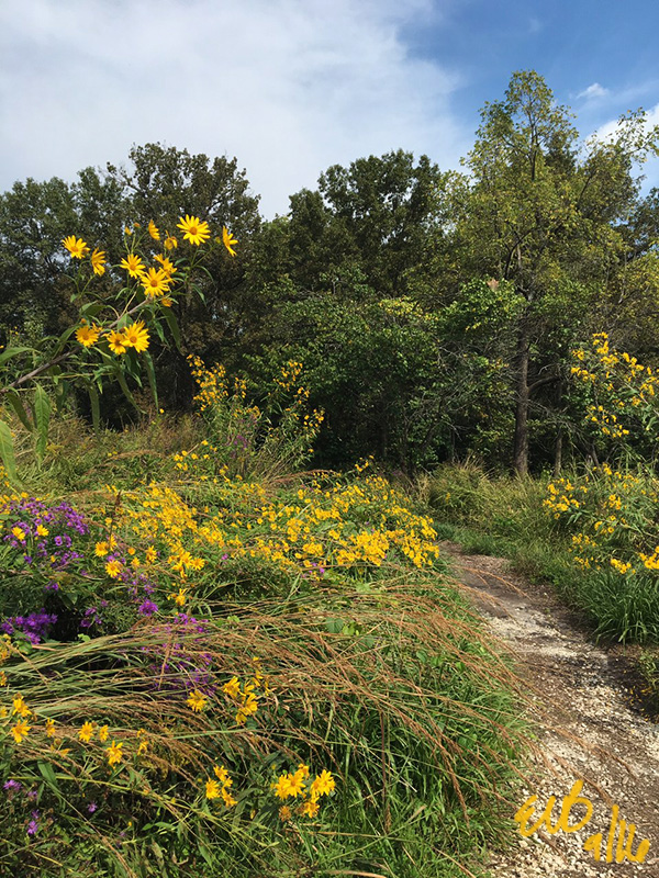 The trail running through a burst of yellow and purple wildflowers. ©2016 by Erin Blumer.