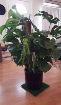 First house warming gift. Thx Nicole <3