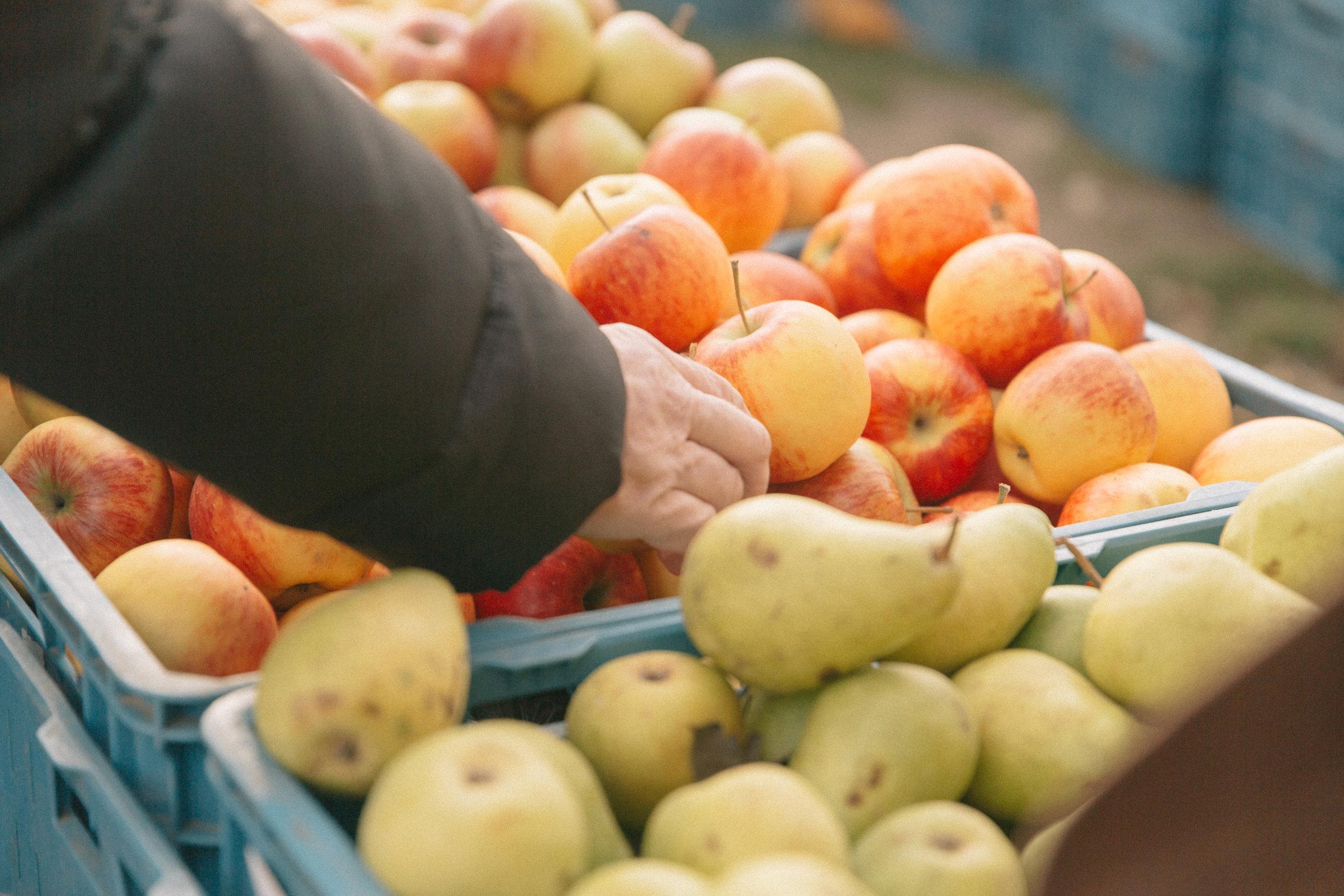 Farmers Market-10.jpg