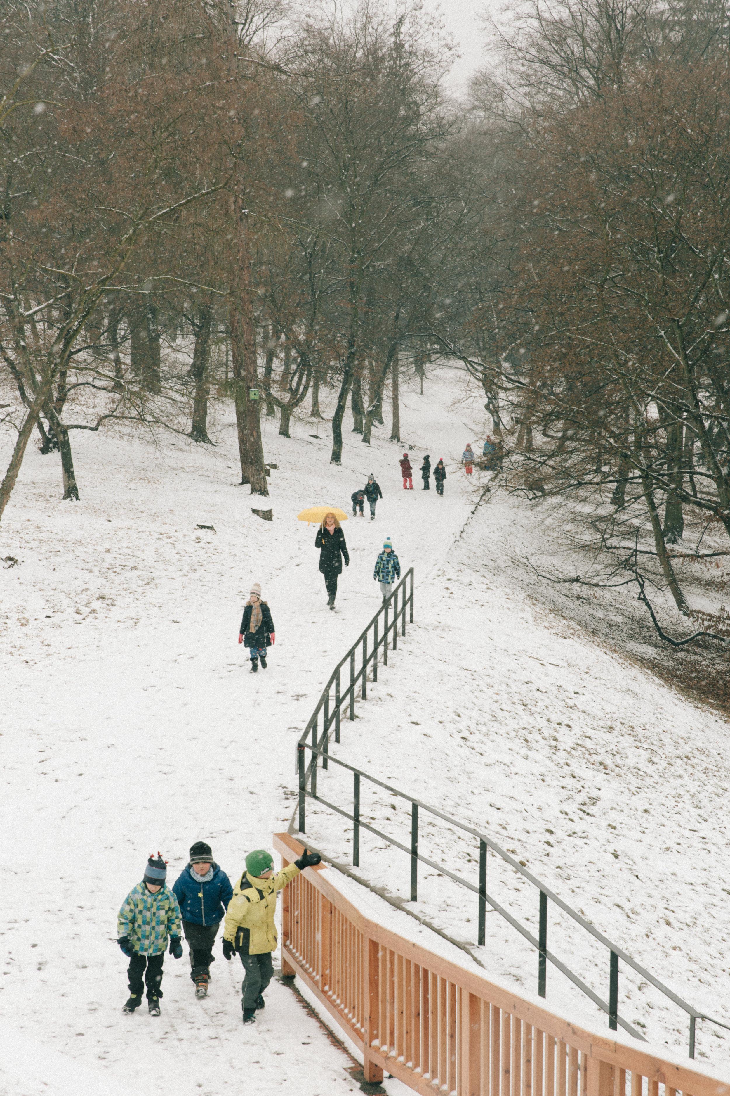 Winter-22.jpg