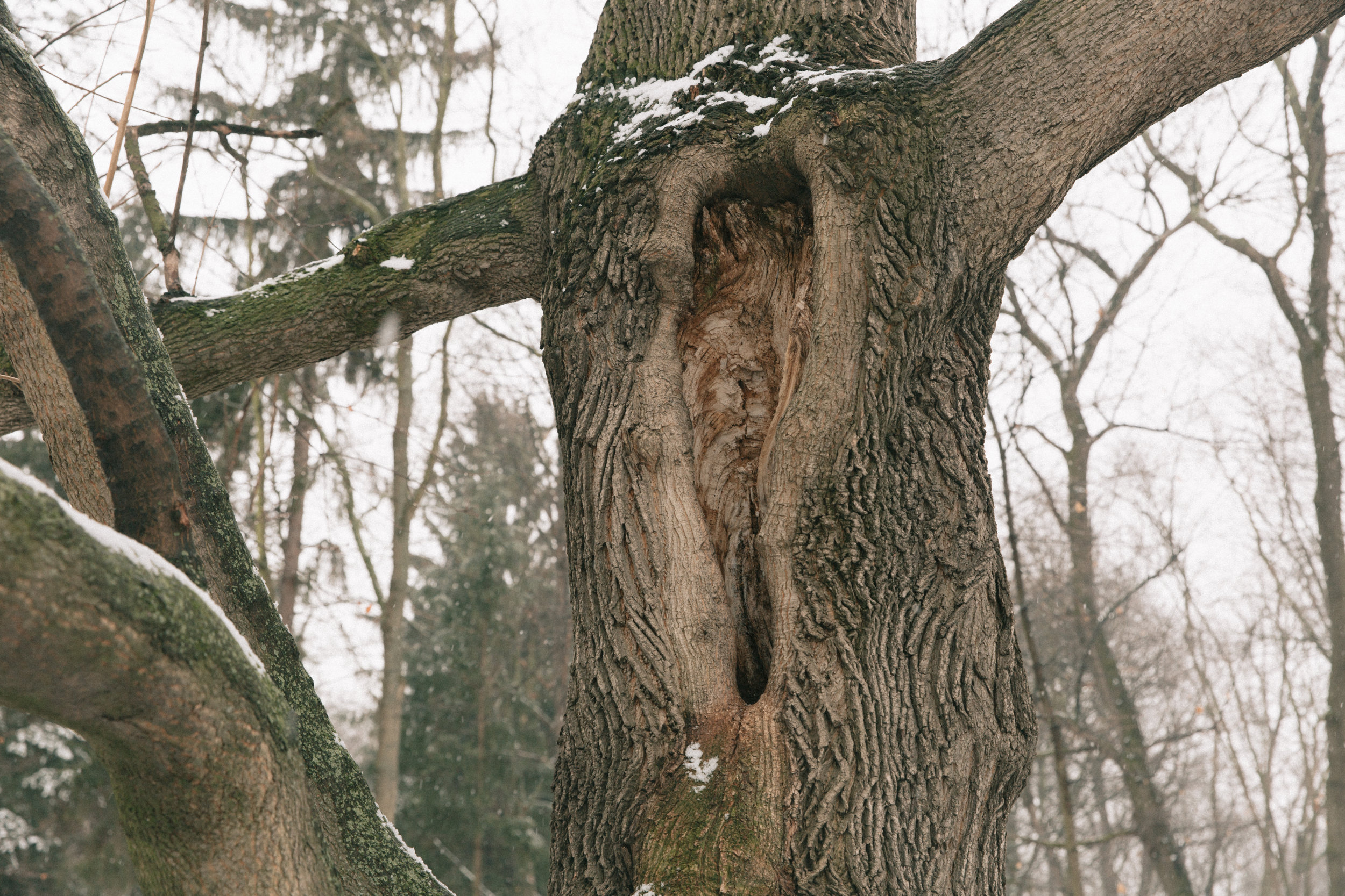Winter-20.jpg