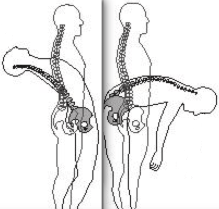 spine-flexion-extension-2.png