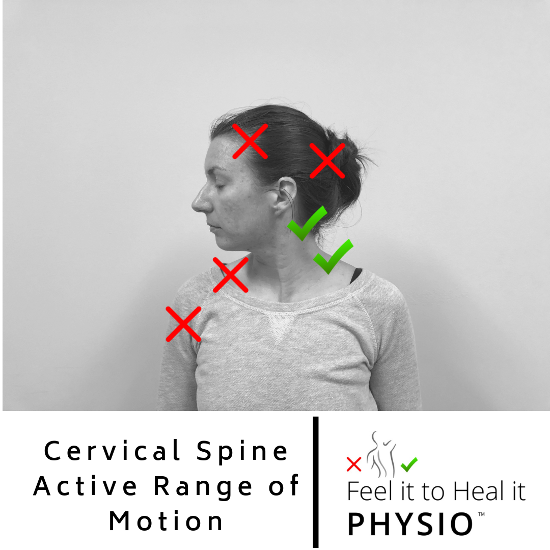 Cervical Spine Rotation - Normal is up to 90 degrees each direction