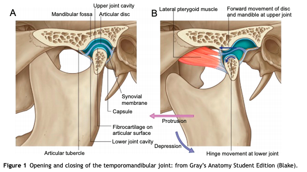 How Does Physical Therapy Help Tmj Pain Physiofit Of Nc