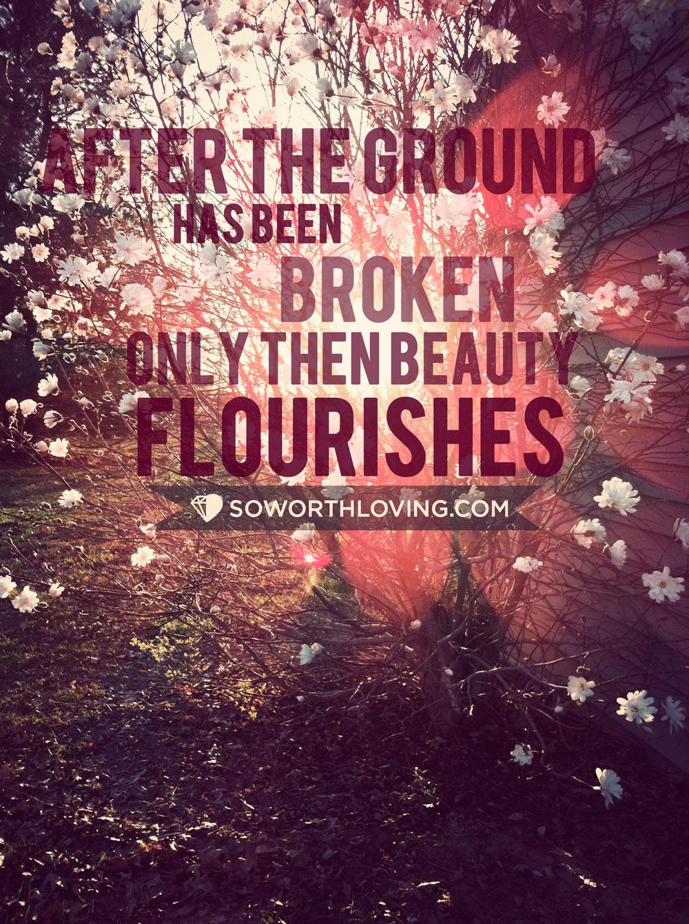 Beauty will flourish…