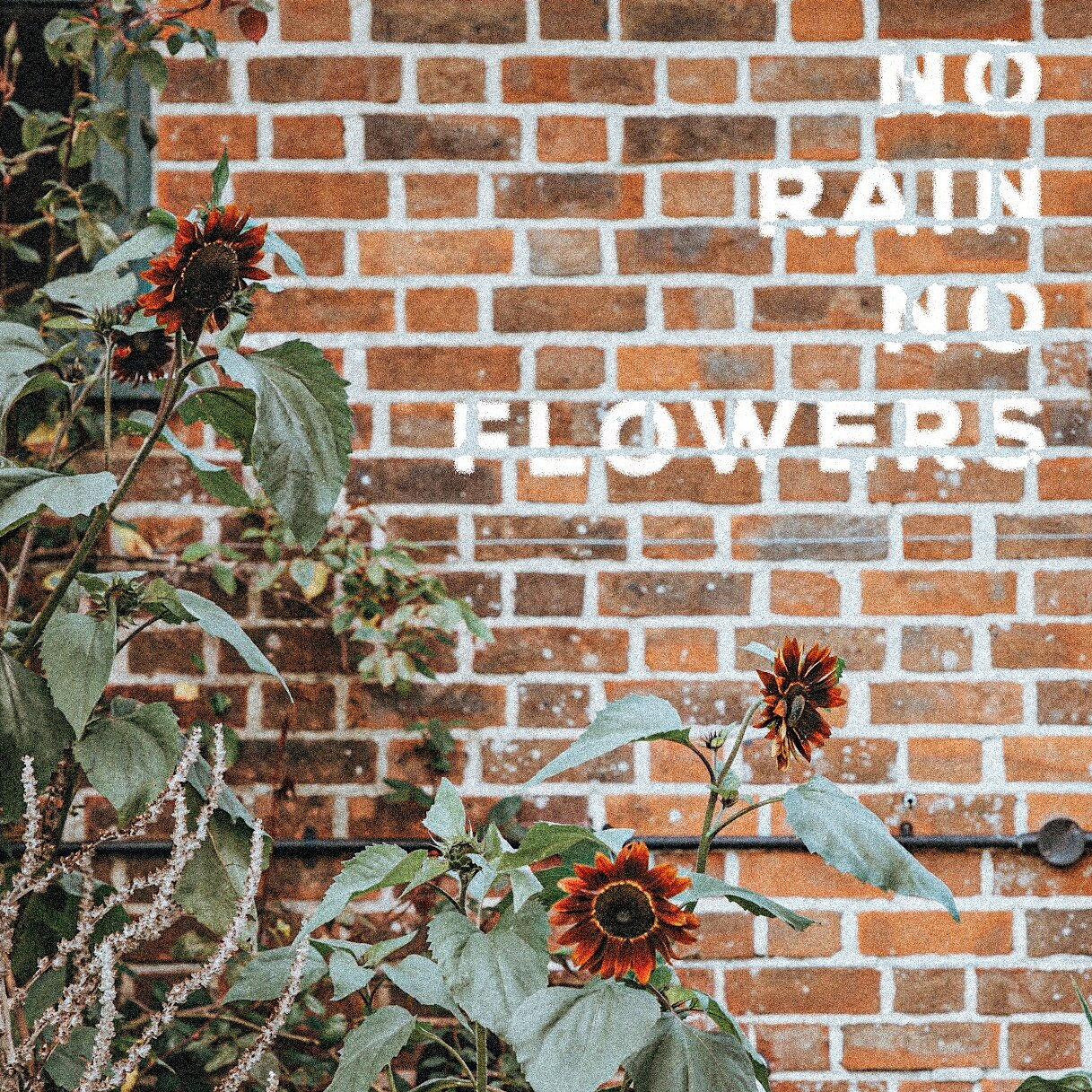 so-worth-loving-blog-no-rain-no-flowers-joshua-thomas