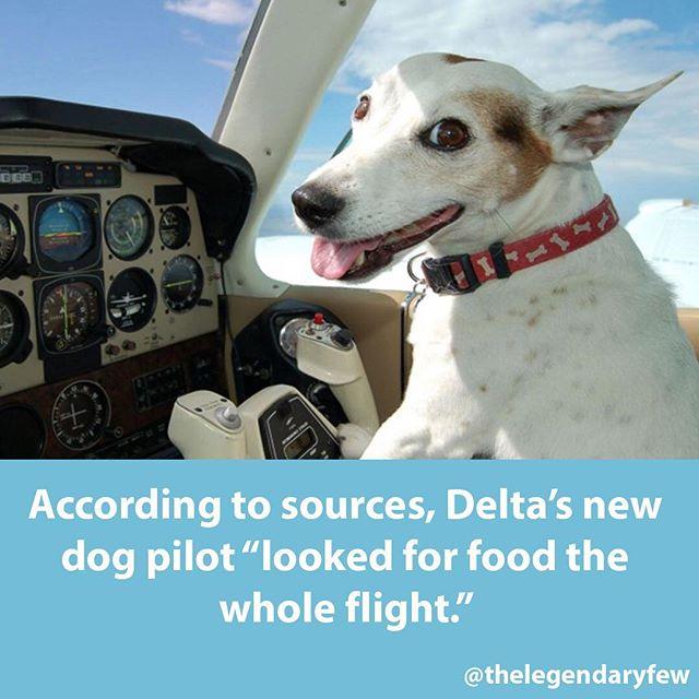 TAG someone whos dog would do this! 😂 #thelegendaryfew * * * #dogs #pilot #doglife #flying #cutedogs #meme #dogmeme #doglovers #flightattendant #pilotlife #flightschool #copilot #humandog #doghumor #travel #travelingtheworld #travels #fakenews