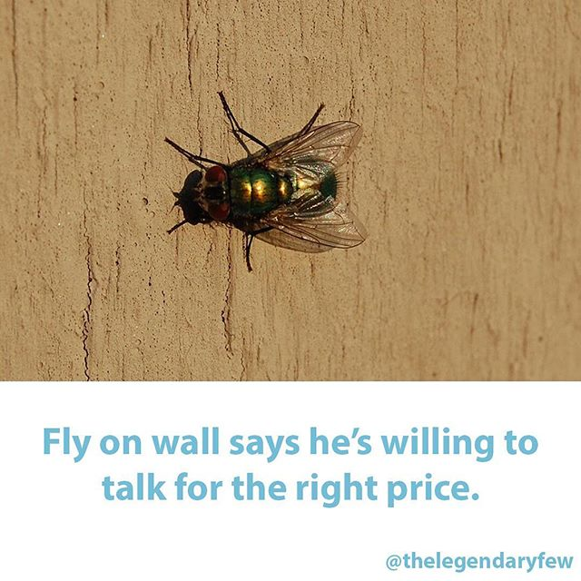 """""""Fly on wall says he's willing to talk for the right price."""" * * * #thelegendaryfew #insects #secrets #gossip #insect #funnymeme #clever #witty #wits #priceisright #sales #negotiation #selfemployed #services #funnymemes"""