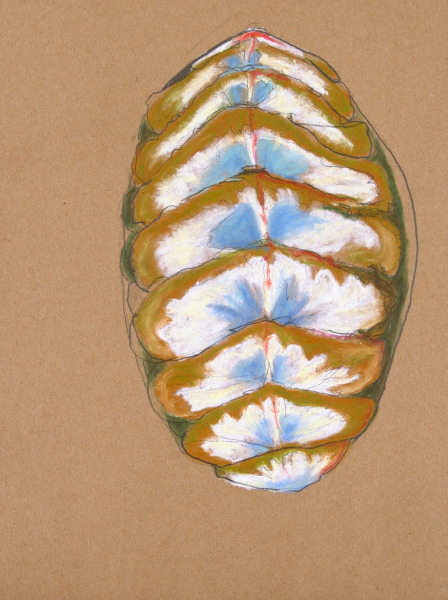 "Carapace: Chiton VII, 12"" x 15"""