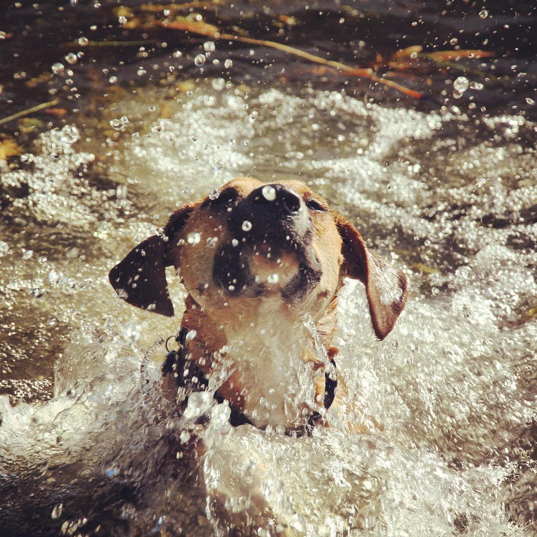 My familiar Gracie Goose, taking a swim.