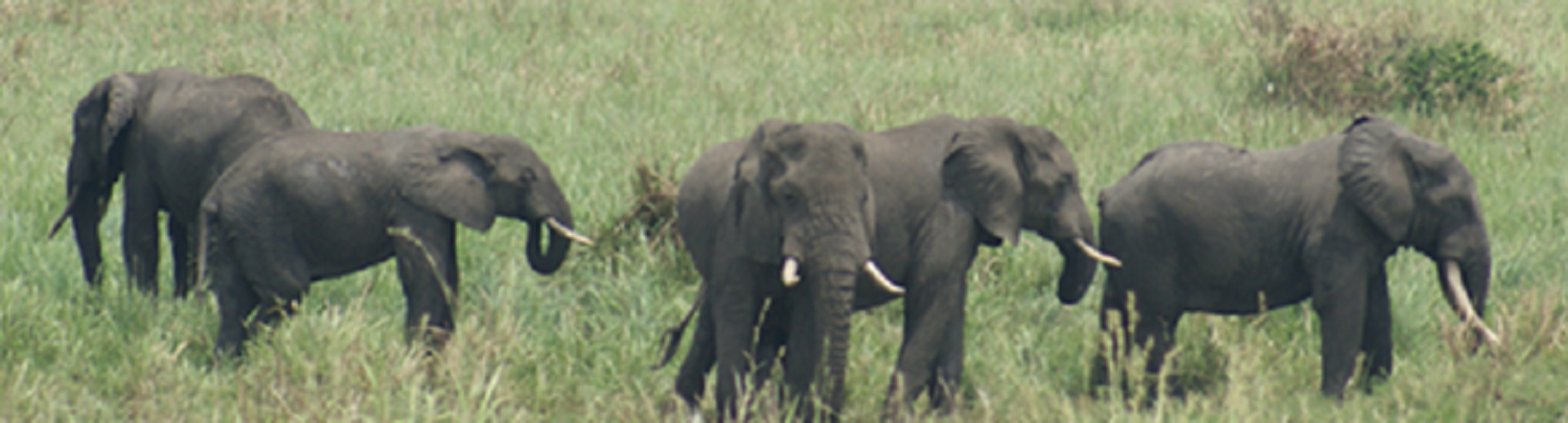 elephant-crisis-take-action-buy-nuvory-donate-conservation-advocacy-ambassador-alternative-ivory-natural-sustainable-compassionate-consumer-education-cdg-cdgstyle-jewelry-luxury-jewellery