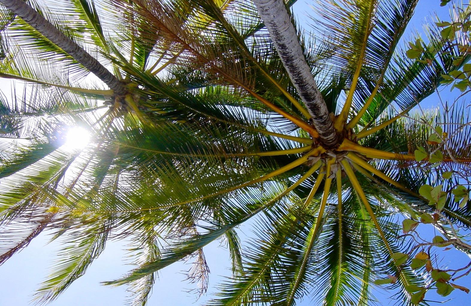elephant-palm-mostbeautifulivorygrowsontrees-nut-ivory-nini-natural-sustainable-compassionate-alternative-noivory-cdg-couleursdegeraldine