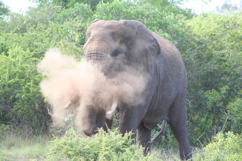 elephant-crisis-tusks-poaching-boycott-CITES-nuvory-nut-ivory-jewellery-jewelry-cdg-cdgstyle-couleursdegeraldine-knotonmyplanet-fashion-luxury