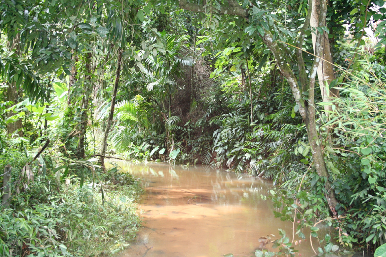 jungle-view-2-png1500.png