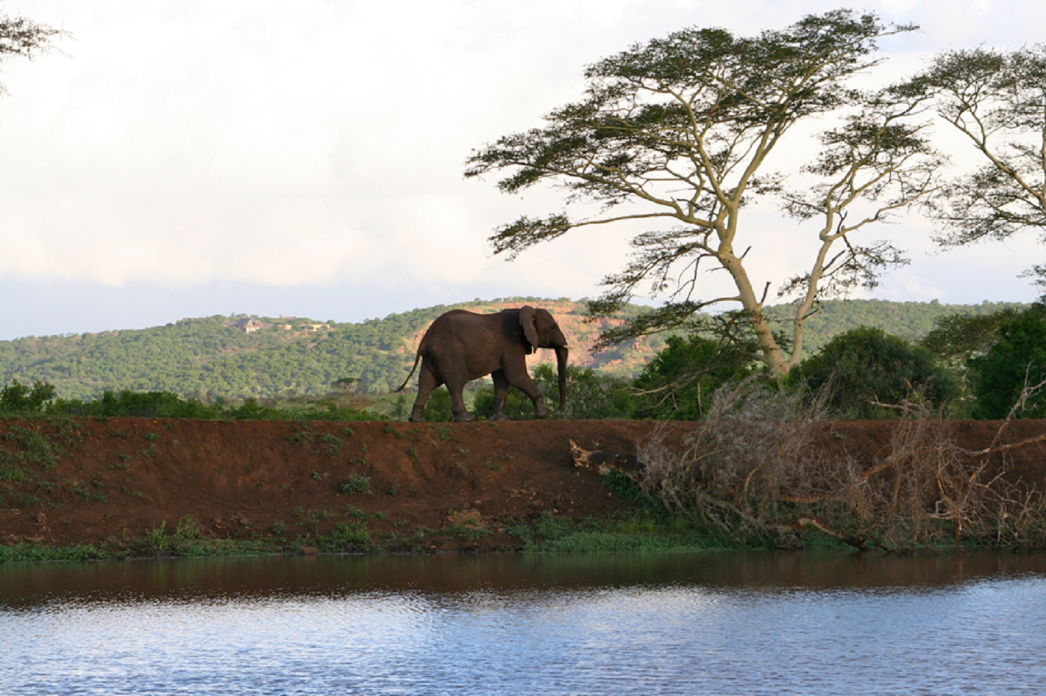 elephants-watering-hole-3-png1500.png