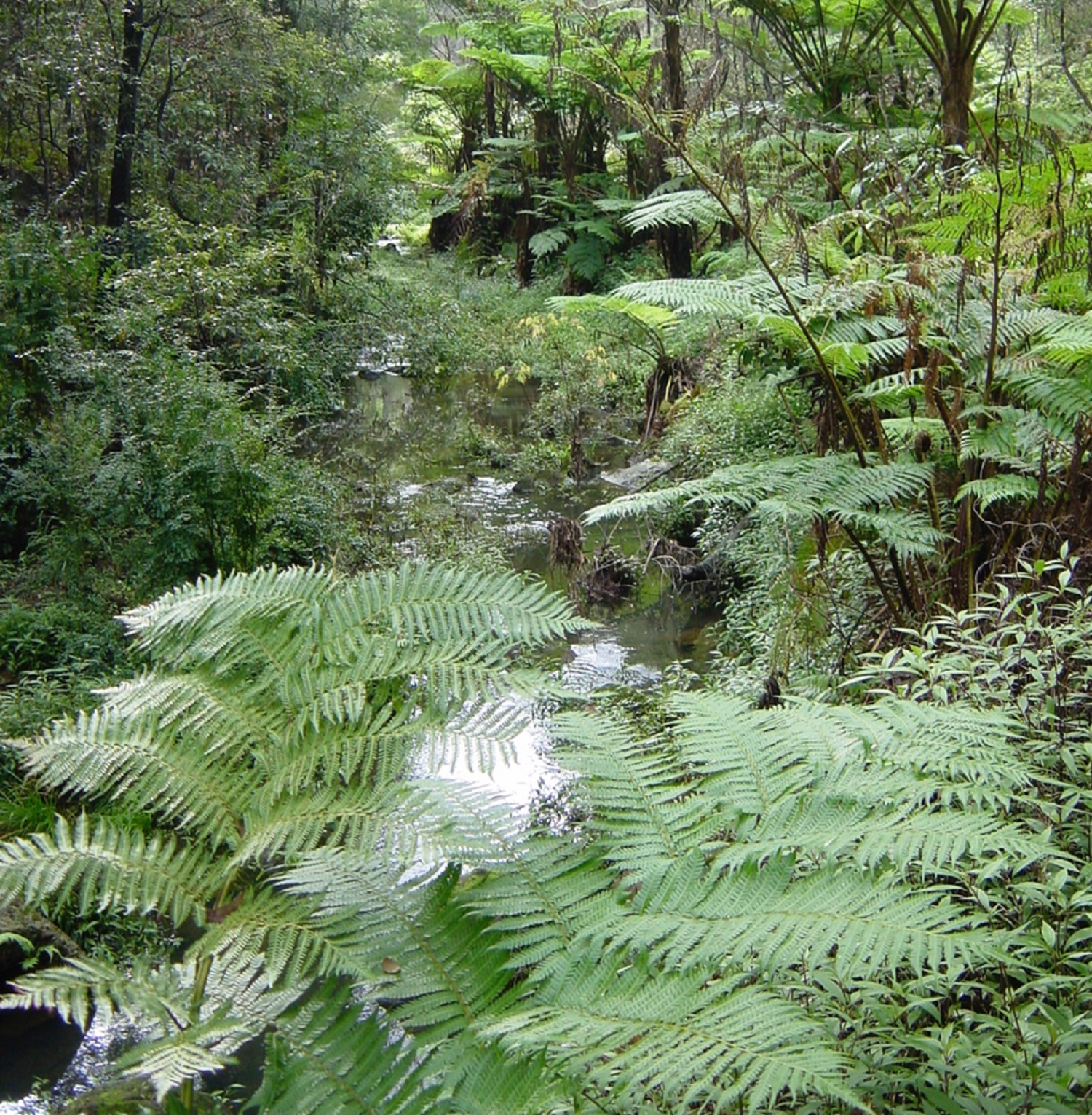 jungle-view-png1500.png