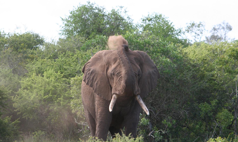 elephant-dust-bath-png1500.png