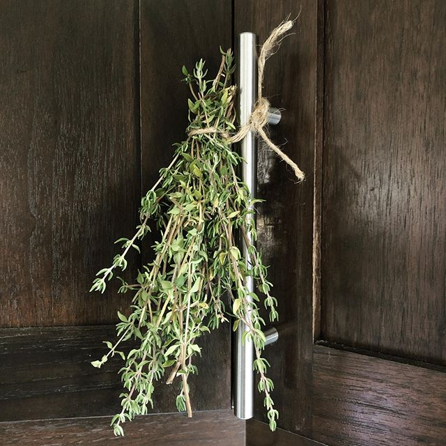 drying some herbs as the weather gets cooler. . . . . #yeg #yegblog #blogger #blog #slowliving #naturalliving #allnatural #thyme #dry #drying #dryingherbs #livingsimply #simpleliving #wastereduction #ecoblog #homestead #cooking #zerowaste #zerowasteliving #inspiration #homestead #yeggreen #bloglife #gracefulnomad #homemade #sustainability #herbs #slowcooking #sustainablehome #sustainableliving #plants