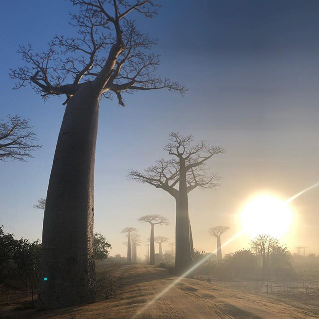 Back at the Avenue of the Baobabs on our 2019 Madagascar Experience.  This place never fails to amaze me!