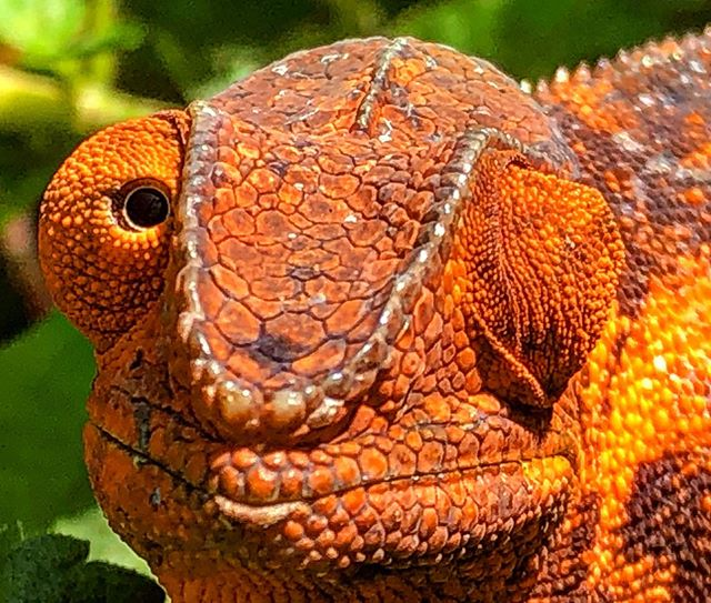 Just one of the many amazing creatures we came across on our 21-day trip through Madagascar.  This 'winking' chameleon posed perfectly for me! www.livingfreerange.co