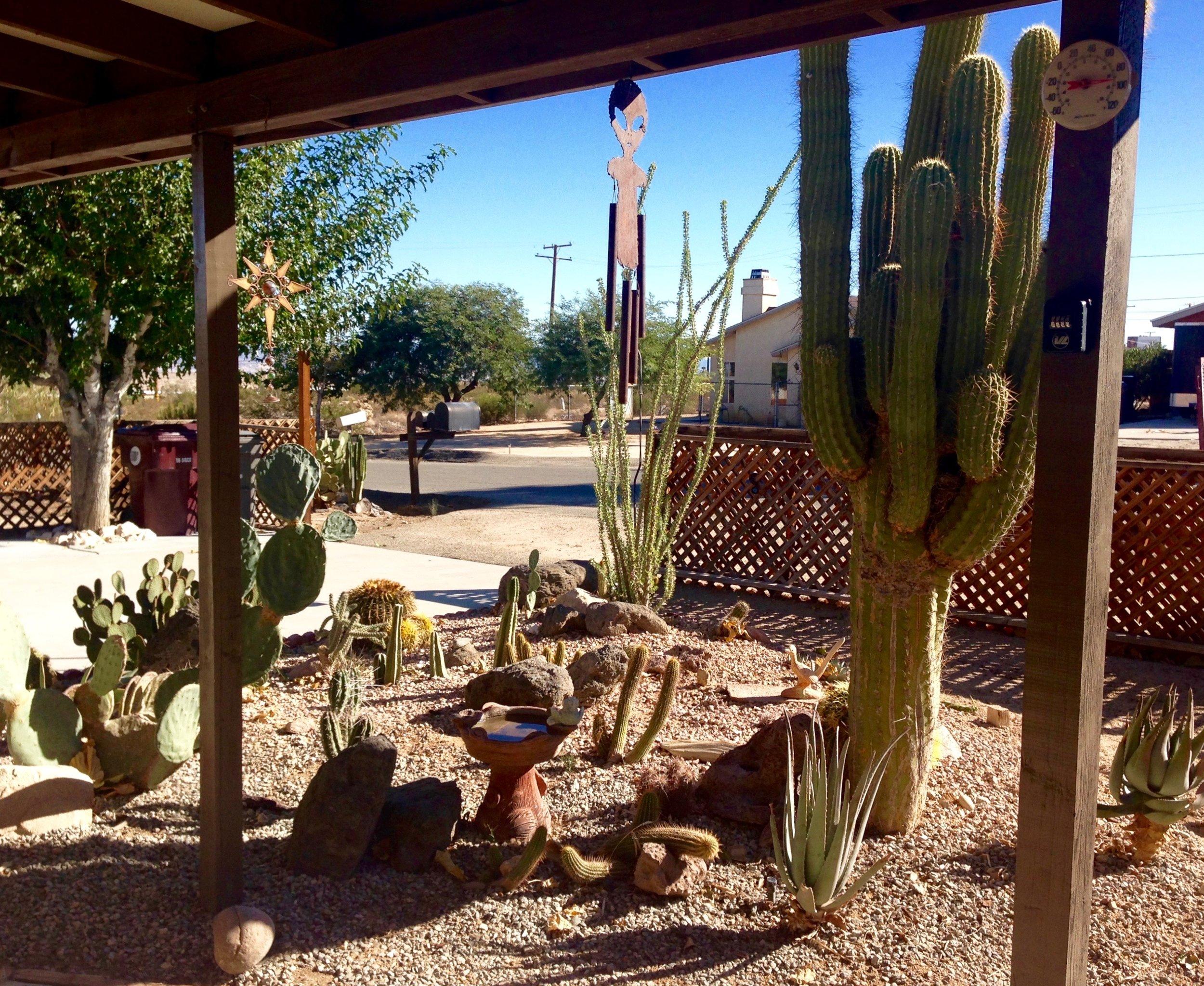 Pine Spring Cactus Garden