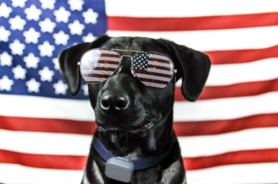 8 TIPS TO PROTECT YOUR PET 4TH OF JULY - RENT29.COM