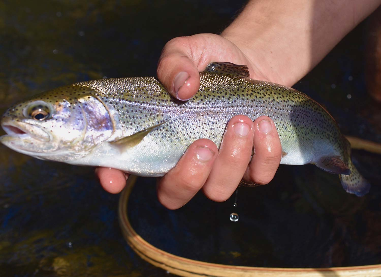 fishwhistler_rainbow.jpg