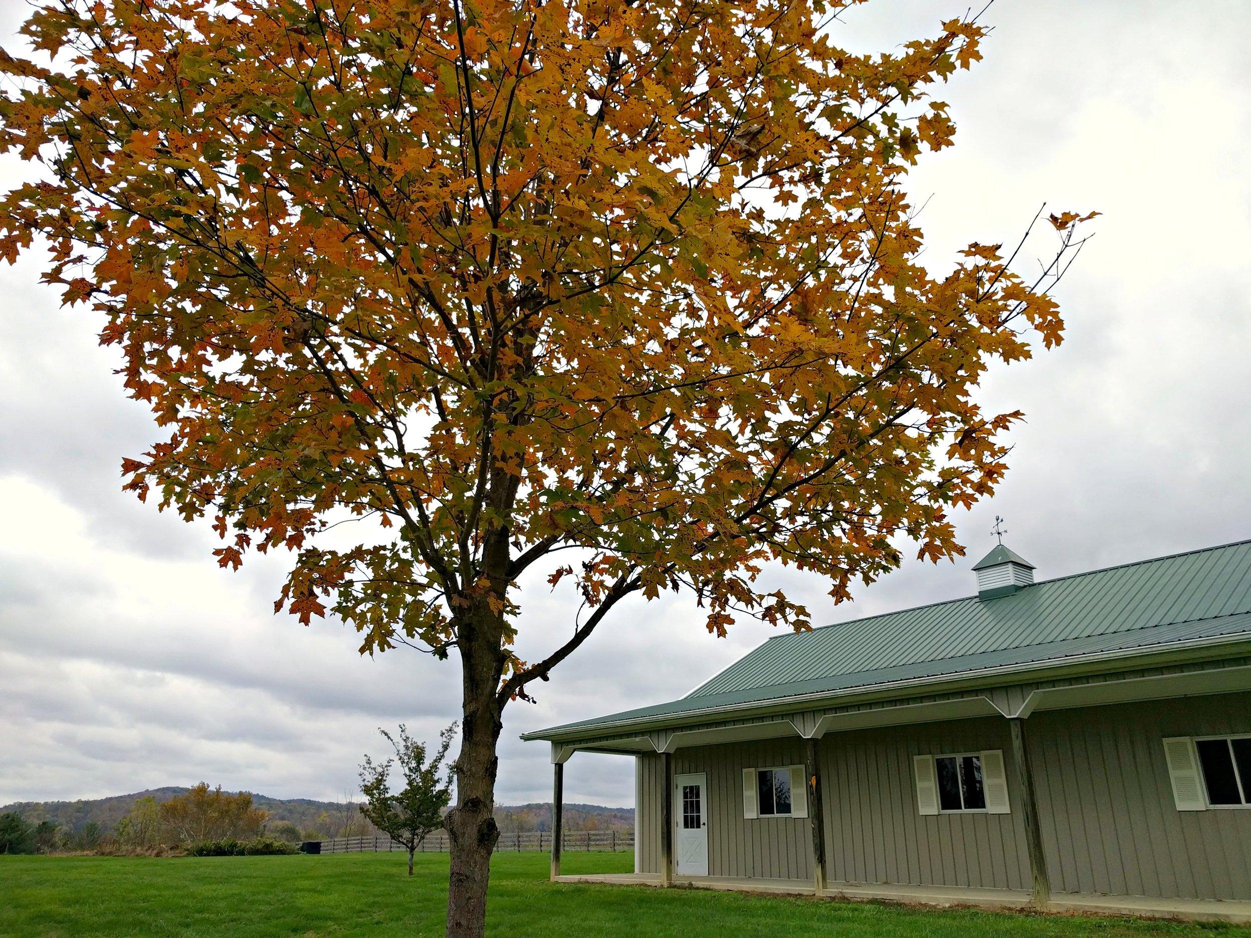 Fall Farm.jpg