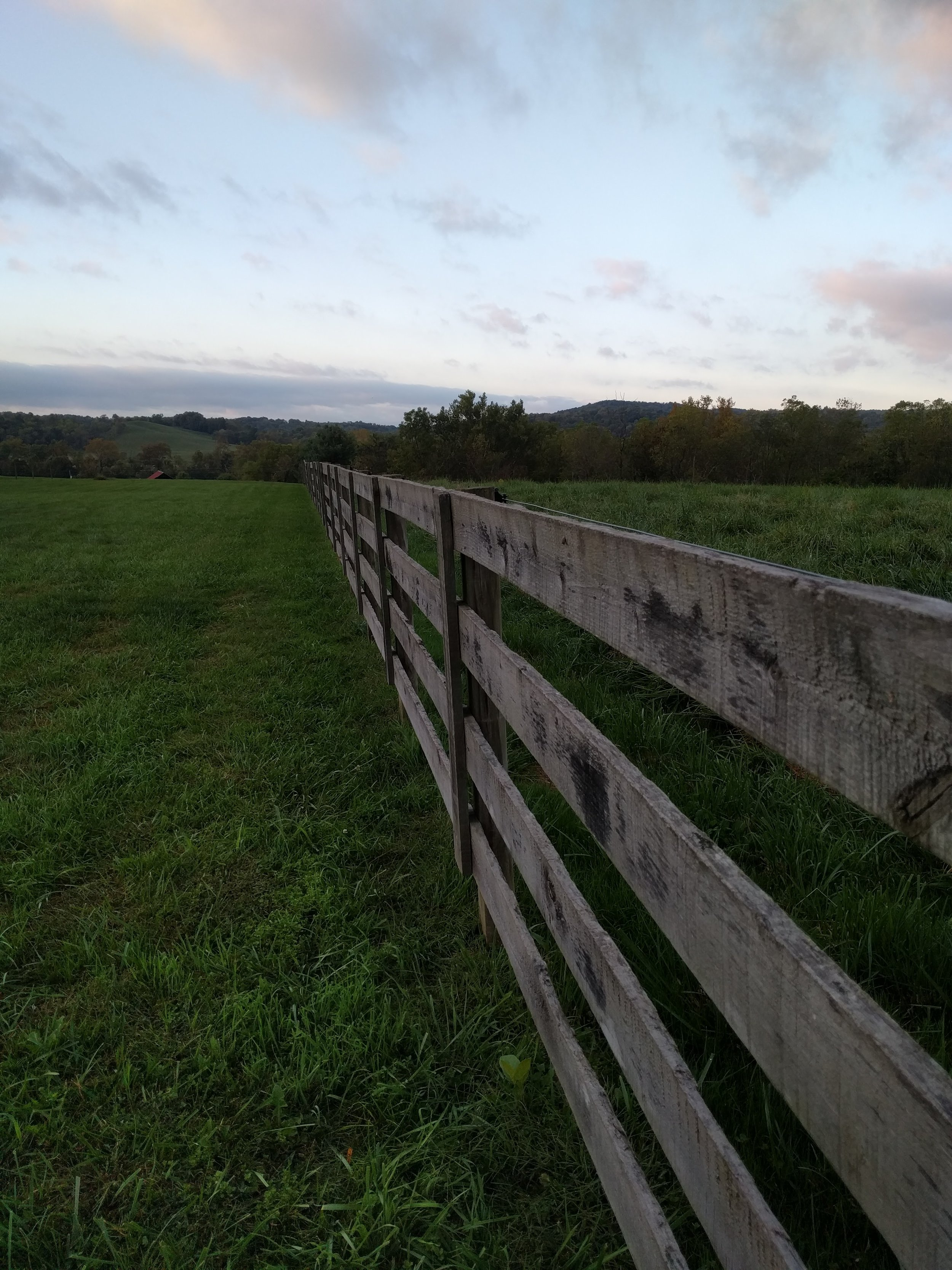 There will be goats on the other side of this fence in a few months! As well as suitable goat fencing.