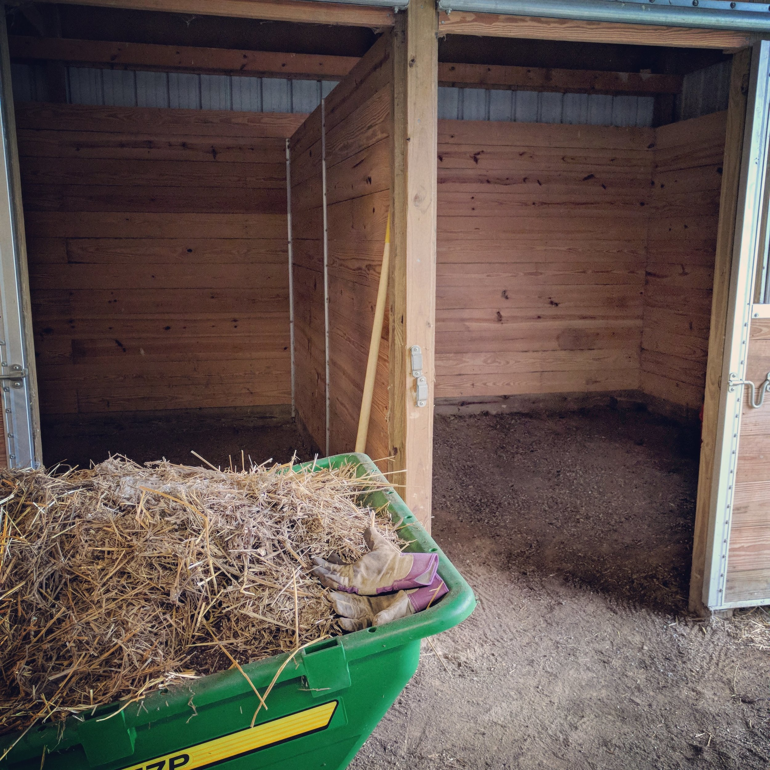 My Mother in Law and I made quick of work of cleaning these stalls last weekend. I credit my stronger arms for that!